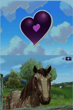 horse_life_3