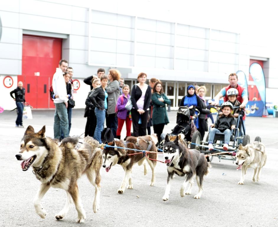 Initiation au chien de traineau, salon Kidexpo 2014